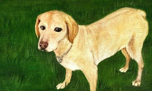 Custom dog portrait by KatCanPaint